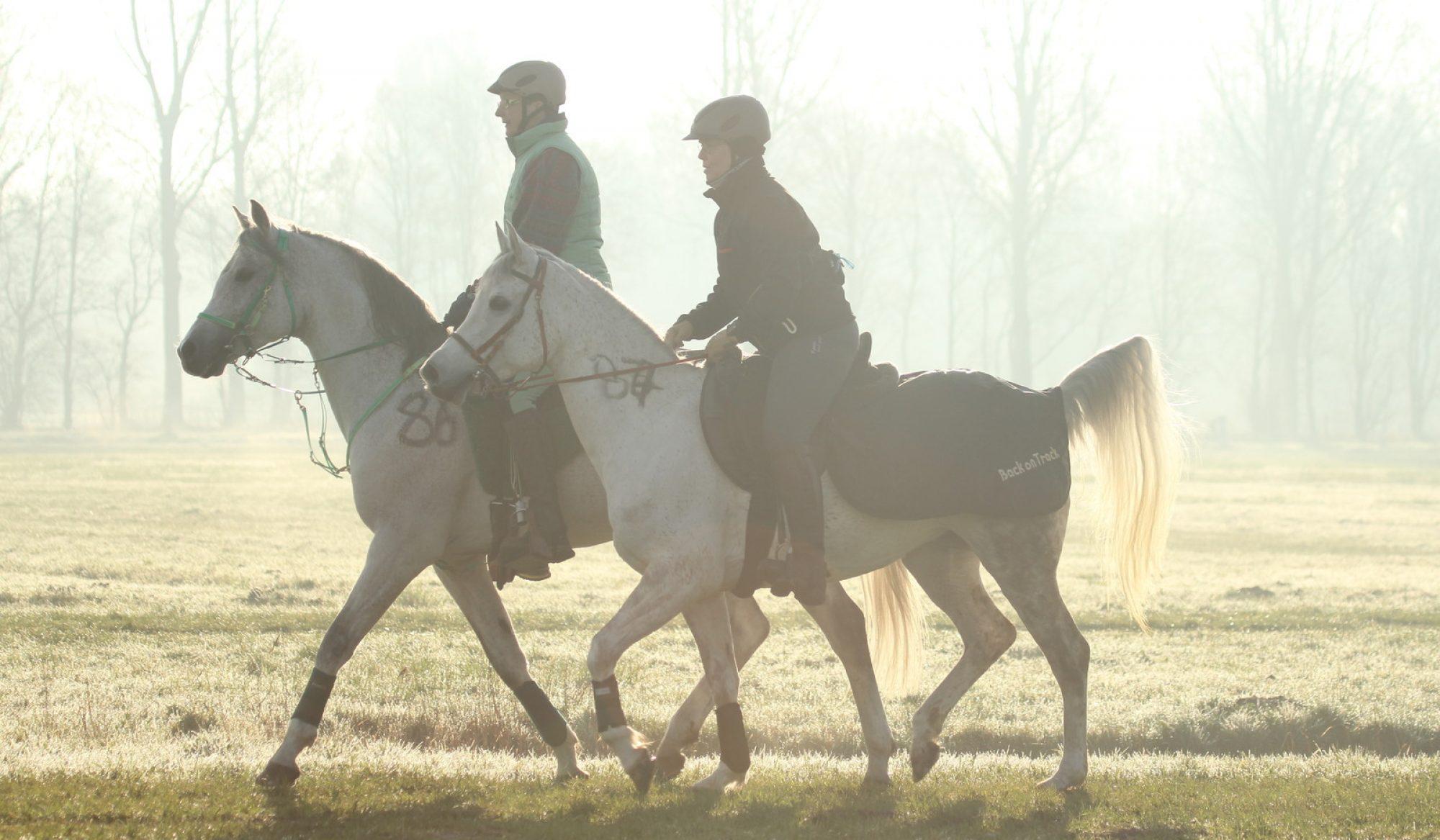 SK Arabians